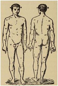 Рис. 4. Полярность тела человека